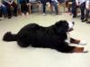 Obisk terapevtskega psa